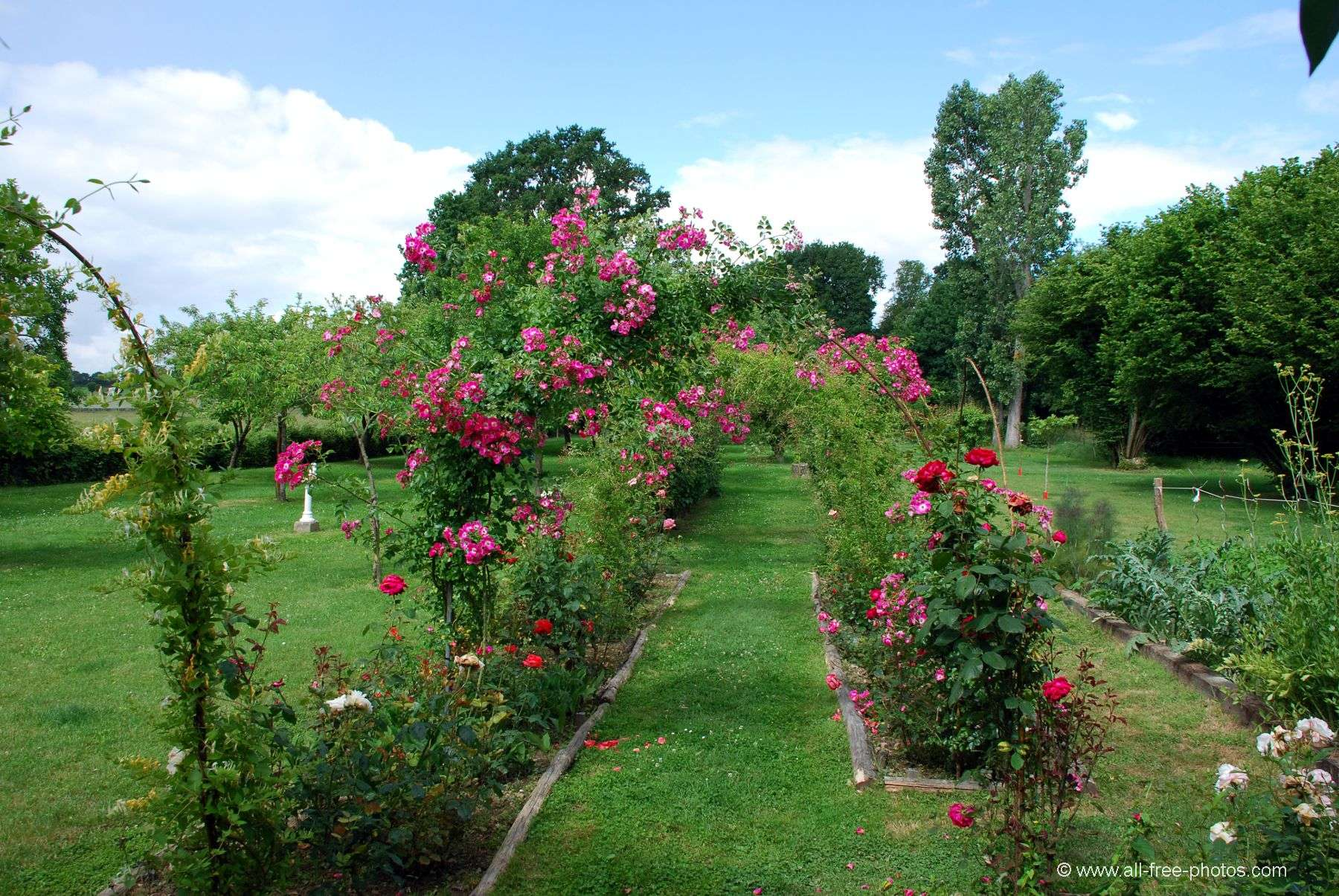 The rose garden - Castle of La Montchevalleraie