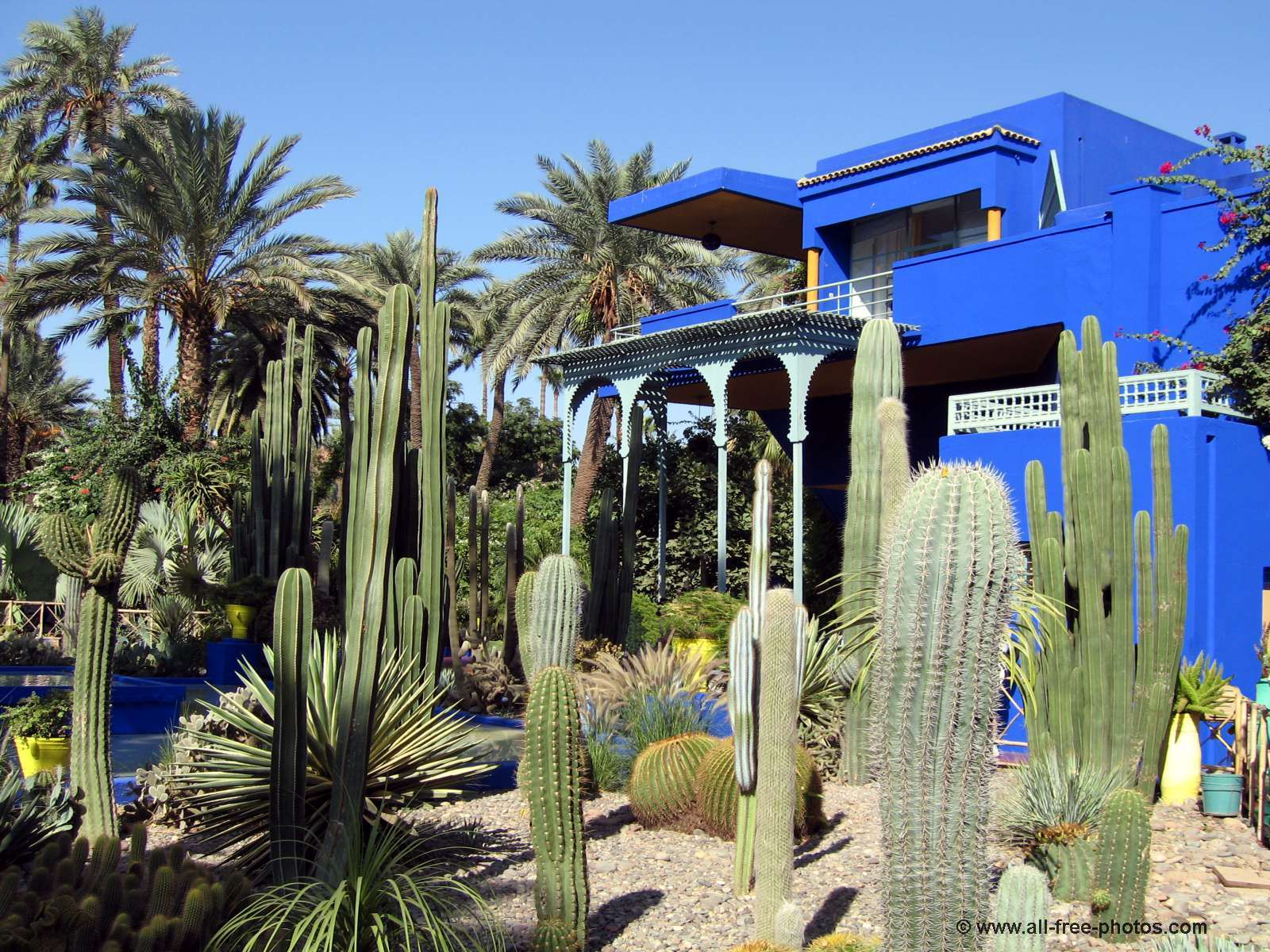 majorelle 39 s garden marrakech jetpac city guides