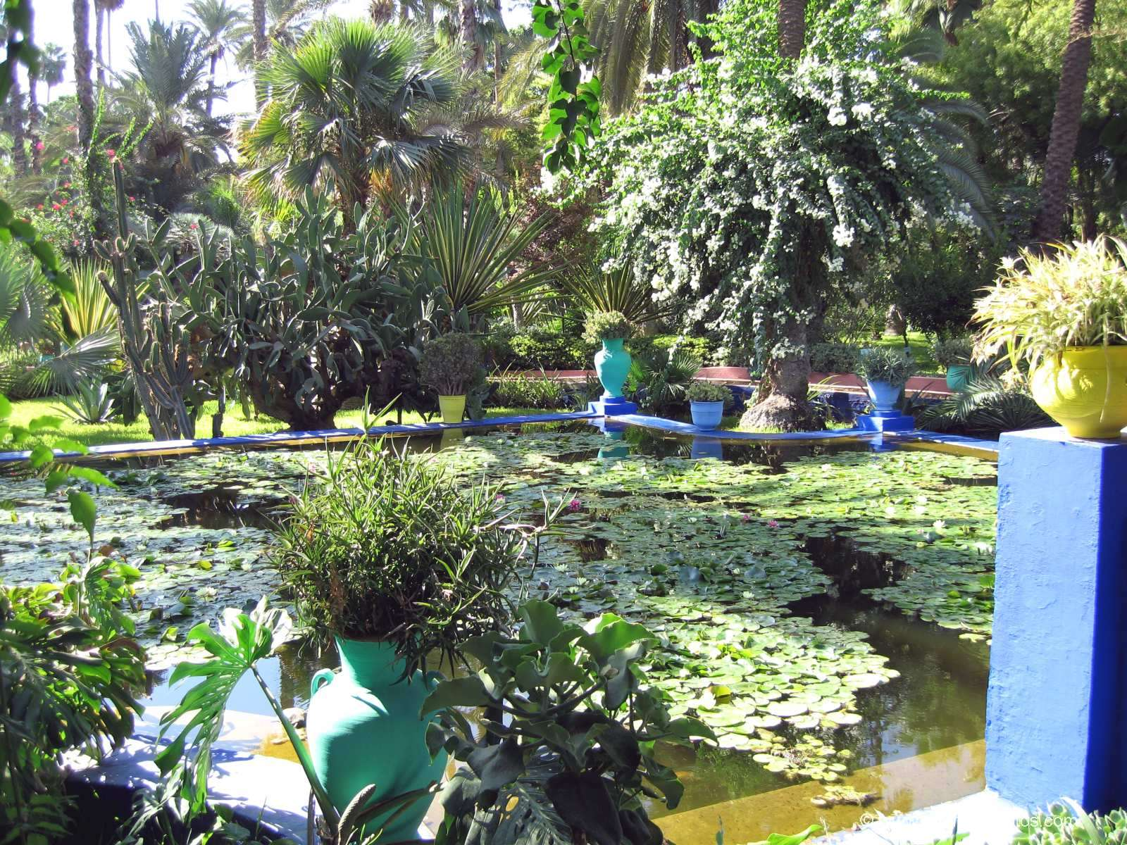 Photo majorelle 39 s garden marrakech morocco for Jardin yves saint laurent maroc